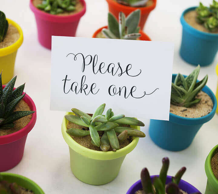 Baby Shower Favours - Succulent surprises
