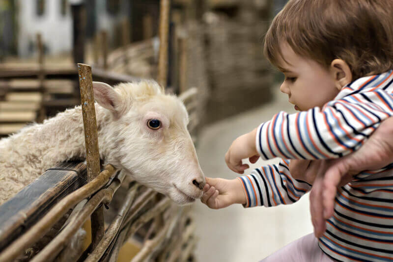 Experience with up-close animal encounters