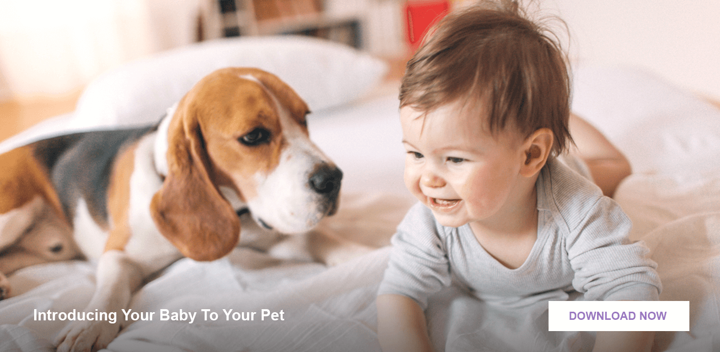 Baby proofing - Introducing your baby to your pet